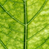 Bumpy Surface of Lotus Leaf Inspired Building Materials