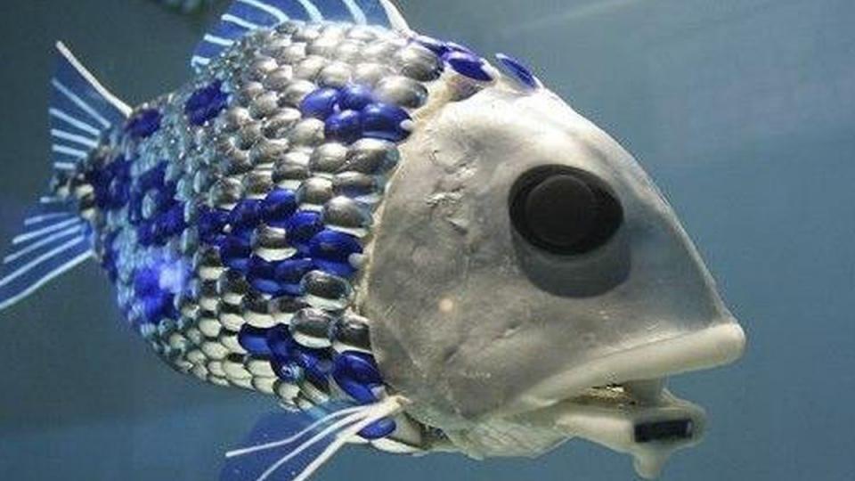Pollution-Sensing Robotic Fish