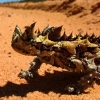 Water System Inspired by Thorny Devil